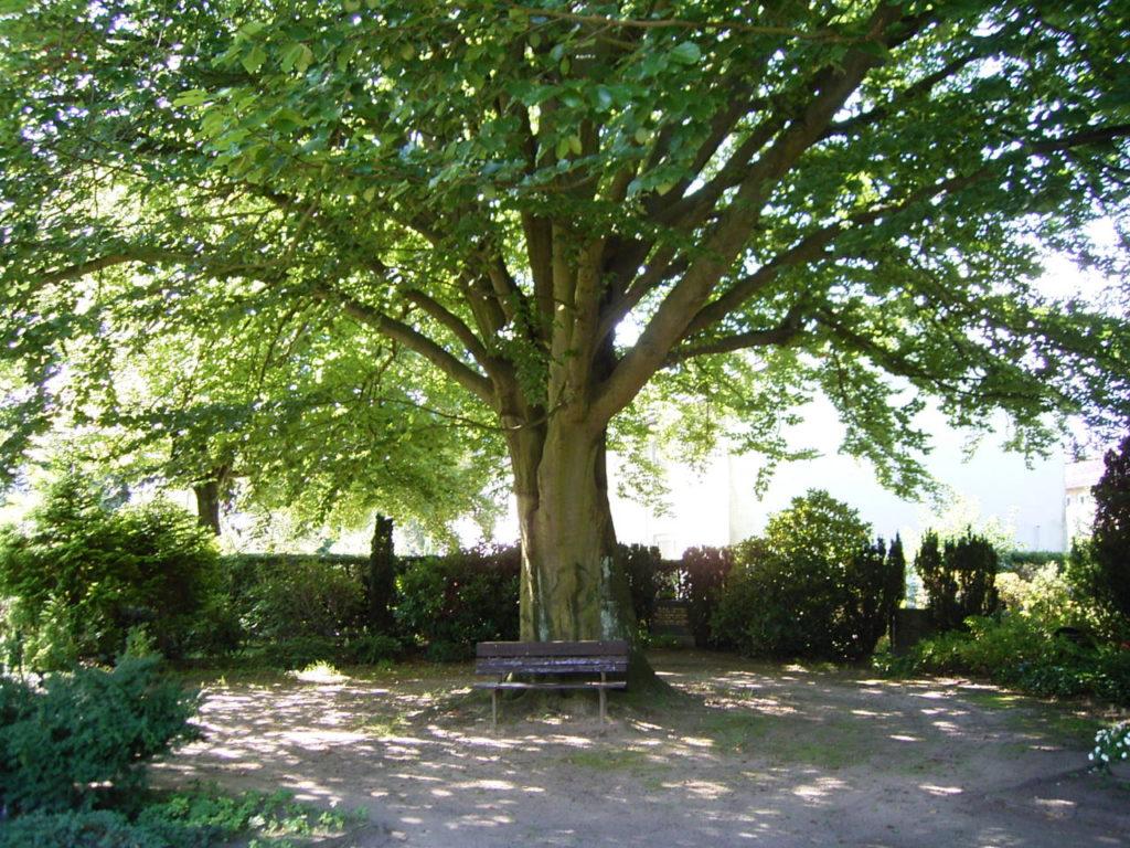 Bank unter Baum auf Friedhof