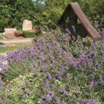 Grab mit Lavendel